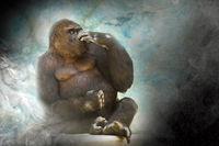 Gorilla im Rauch