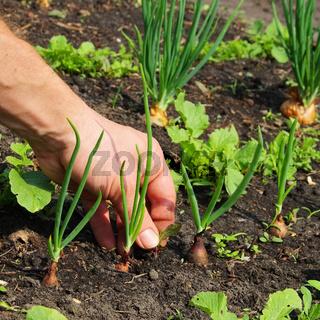 Unkraut jaeten - pull up weeds 04