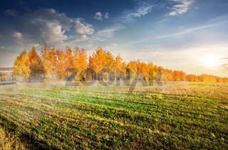 Autumn forest and field