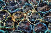 hummerkäfige