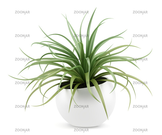 houseplant in pot isolated on white background