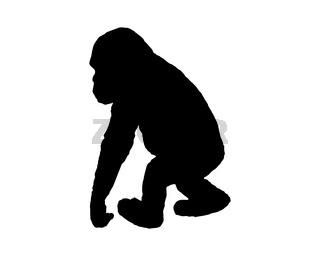 Schimpanse - Little chimpanzee