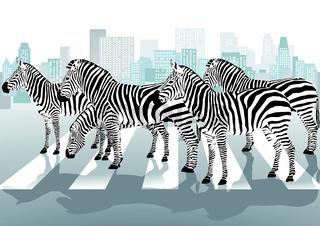 Zebrastreifen und Zebras.eps