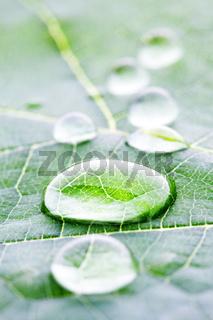 Water drops on leaf macro
