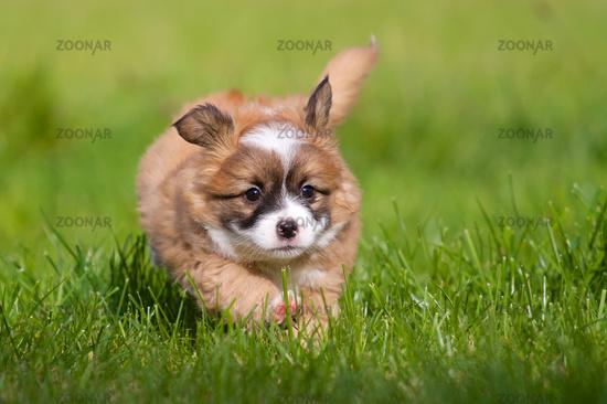 Glückliches Hundebaby