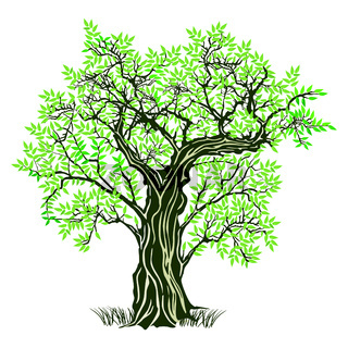 alter Olivenbaum.eps