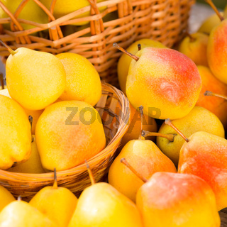 Ripe yellow pears in autumn outdoors
