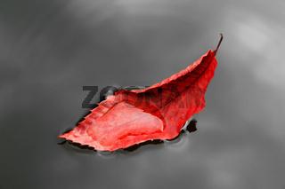 Kastanienblatt Wasser