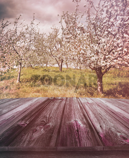 Wooden planks with apple orchard in background