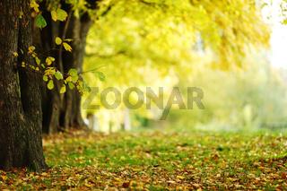autumn park orange leaf around
