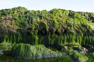 Meeresboden 3