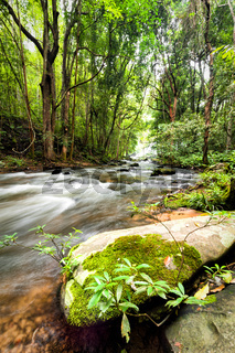Tropical rainforest landscape with flowing river, rocks and jungle plants. Chiang Mai province, Thailand
