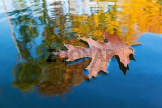 Ahornblatt und Herbstlaub auf Wasser
