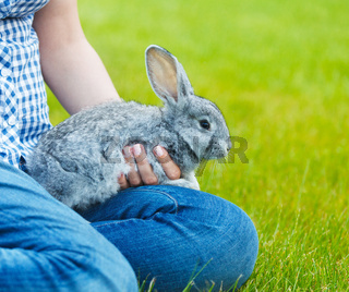 Cute little grey rabbit in the hands of a woamn on green grass background