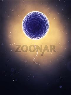3d rendered illustration of the fertilization