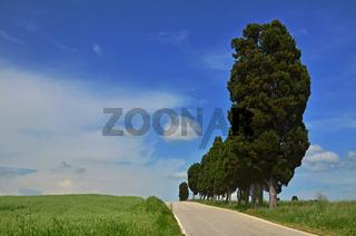 Landstrasse in der Toskana