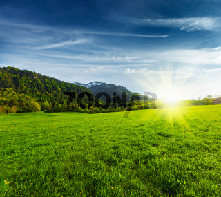 Alpine meadow in Bavarian Alps. Bavaria