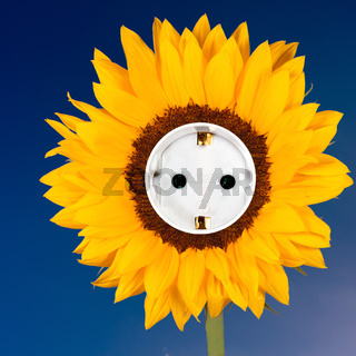 Sonnenblume und Steckdose vor blauem Himmel