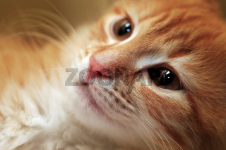 Portrait of a young cat