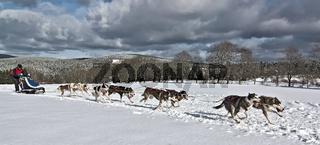 Hundeschlittenrennen Clausthal-Zellerfeld 2015