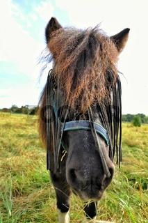 neugieriges Ponny