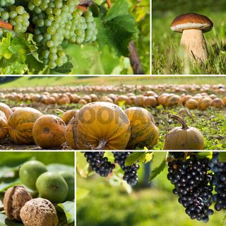 Herbstfrüchte Collage
