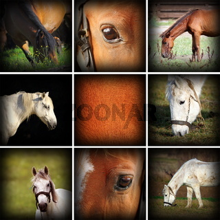 collection of horses pictures