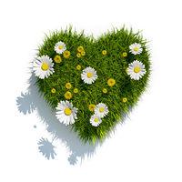 grass heart on white background