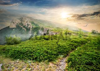 Juniper in mountains