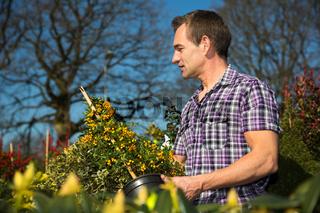 Man looks at bush full of berries in nursery