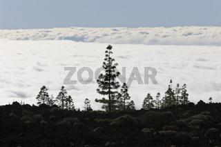Wolkendecke unterhalb der Teide Region, Teneriffa