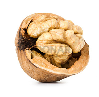 walnut half  isolated on the white background