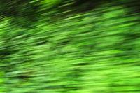 speed nature