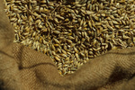 Getreidekörner im Sack