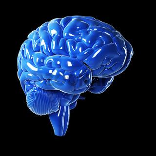 3d rendered illustration - glossy blue brain