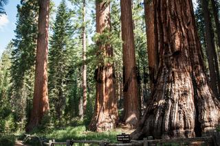 Yosemite Bachelor