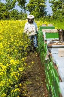 stolzer Imker beobachtet seine Bienen