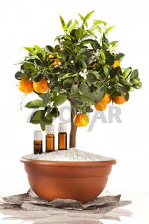 Ätherische Öle des Orangenbaumes