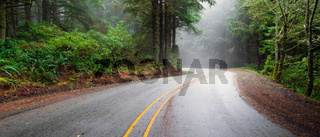 Misty Forest Two Lane Highway Rural Country Coastal Road
