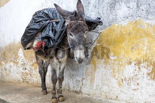 Esel in einer Gasse, Marokko