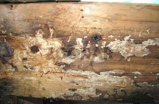 Balken mit Holzpilz