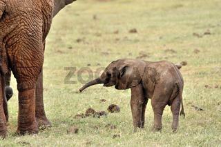 Kleiner verspielter Elefant, Elefantenbaby