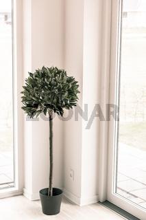 Indoor plant in bright enviroment