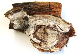 Holzpilzbefall