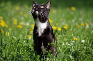 junge Katze im Gras