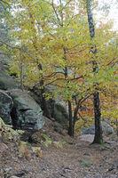 Herbst am Kleinen Bärenstein