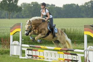 Springen mit Haflinger / Haflinger horse jumping