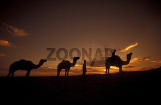 Ein Kamel Besitzer in der Tar Wueste bei Jaisalmer in der Provinz Rajasthan in West Indien in Indien.