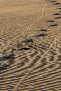 sand spuren schraeg