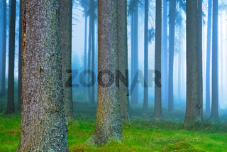 Wald im Frühnebel
